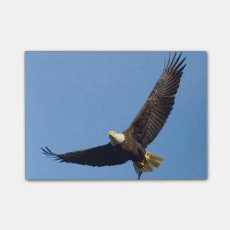 Großartiges Eagle Post-it Klebezettel