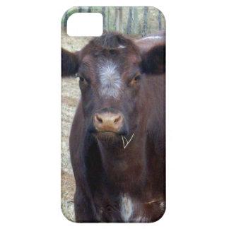 Große fette Brown-Kuh, iPhone 5 Hüllen