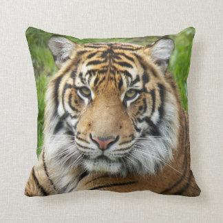 Große Katzen-Tiger-Foto-Quadrat Kissen