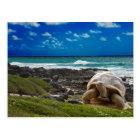 Große Schildkröte am Seerand Postkarte