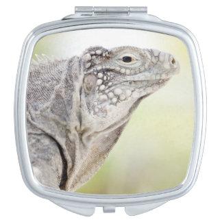 Großer grüner Leguan, der in der Sonne in sich Taschenspiegel