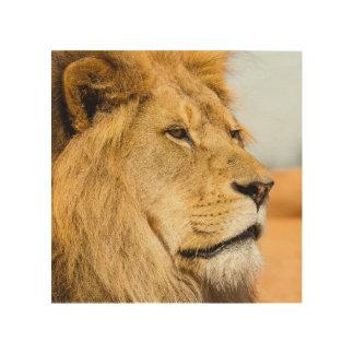 Großer Löwe, der weit weg schaut Holzleinwand