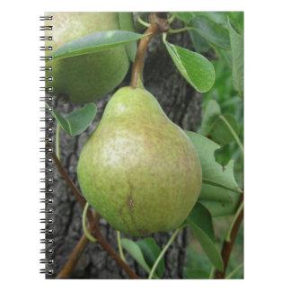 Grüne Birnen, die an einem wachsenden Birnenbaum Spiral Notizblock