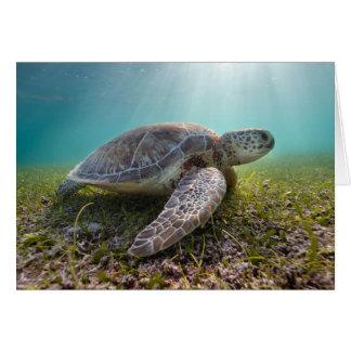 Grüne Meeresschildkröte der Bucht an der Grußkarte