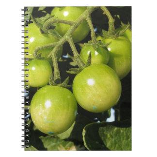 Grüne Tomaten, die an der Pflanze im Garten hängen Notizblock