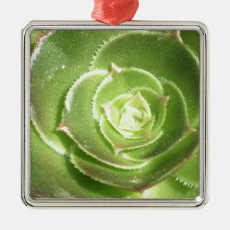 Grüner Succulent Quadratisches Silberfarbenes Ornament