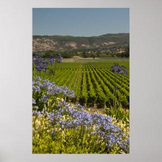Grüner Weinberg und lila Blumen Poster