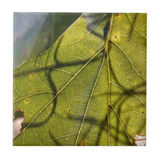 grünes Blatt mit spanisches Moos Tendrils im Keramikfliese