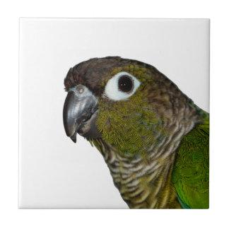 Grünes Cheeked Conure Keramikfliese