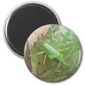 Grünes Kricket auf einem Blatt-Magneten Runder Magnet 5,7 Cm
