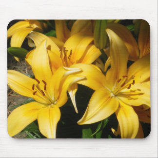 Gruppe weiche orange Lilien Mauspads