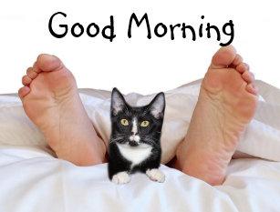 Guten Morgen Postkarten Zazzleat