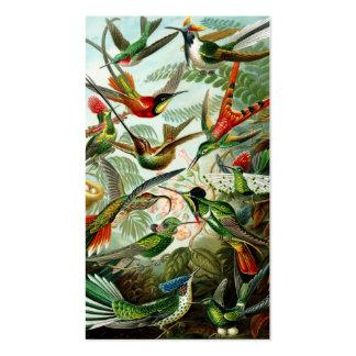 Haeckel Kolibris Visitenkartenvorlagen