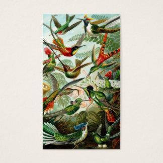 Haeckel Kolibris Visitenkarten
