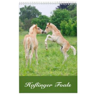 Haflinger fohlt 2017 kalender
