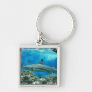 Haifisch mit Riff Keychain Schlüsselanhänger