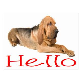 Hallo Bluthund-Hündchen-Gruß-Postkarte Postkarte