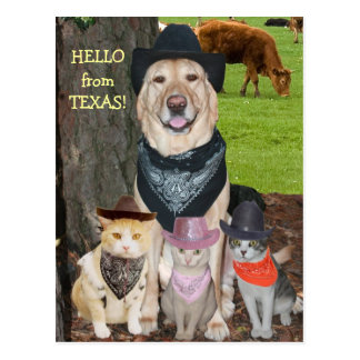 Hallo von Texas! Postkarten