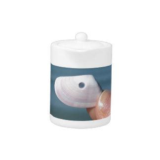 Halten eines Seashell in der Hand mit blauem Meer