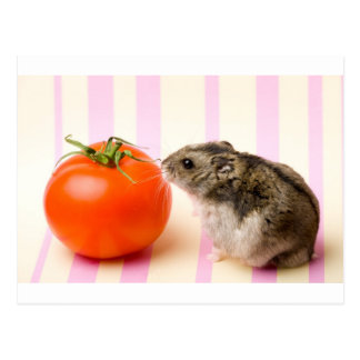 Hamster und Tomate Postkarten