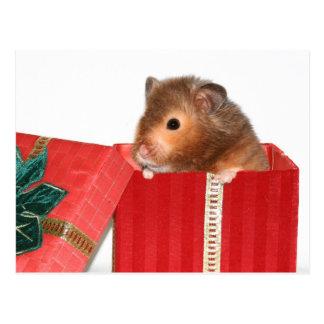 Hamster-Weihnachtsgeschenk Postkarte