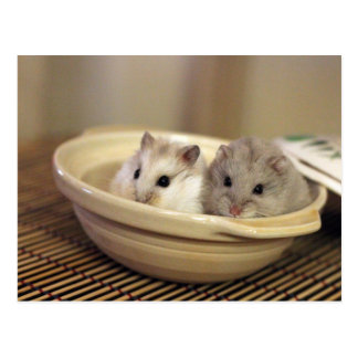 Hamsters Postcard Postkarte