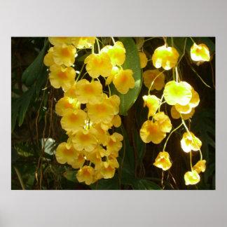 Hängende gelbe Orchideen-tropische Blumen Poster