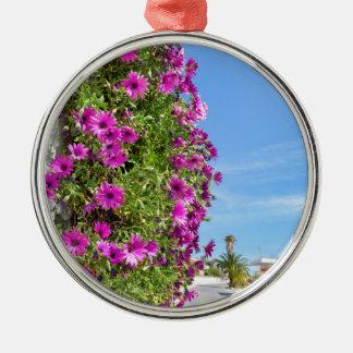 Hängende rosa spanische Gänseblümchen auf Wand Silbernes Ornament
