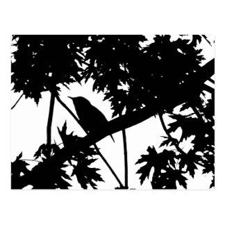 Haus-Zaunkönig-Silhouette-Liebe-Vogel-Aufpassen Postkarte
