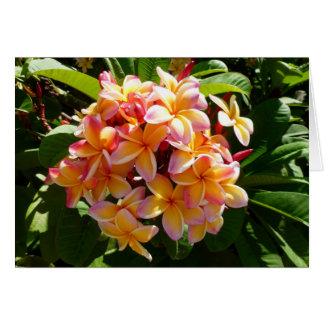 Hawaiischer Frangipani Grußkarte
