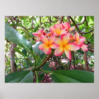 Hawaiischer Plumeria Poster