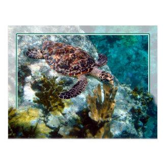 Hawksbill Meeresschildkröte, die US-Jungferninseln Postkarte