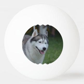 Heiserer Hund Tischtennis Ball