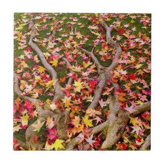 Hell buntes Ahorn-Blätter Fliese