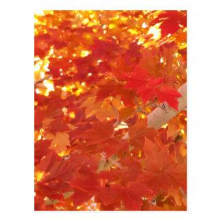 Helles Ahorn-Blätter Postkarte