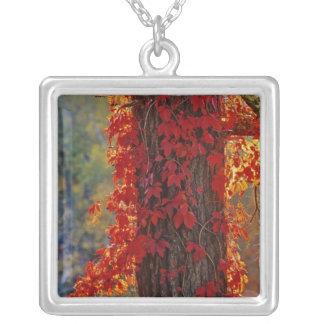 Helles Rot Virginia-Stramplers im Herbst an Versilberte Kette