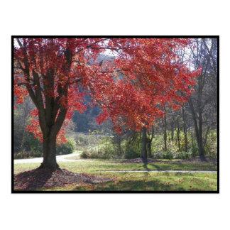 ~ Herbst ~ 30 Postkarte