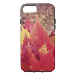Herbst-Blätter iPhone 8/7 Hülle