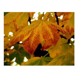 Herbst verlässt II Postkarte
