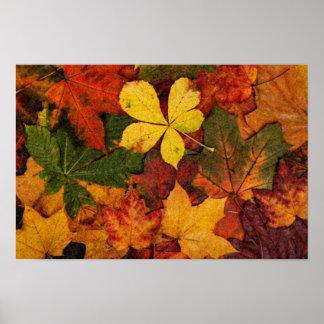 Herbst verlässt Natur-Leinwand zu drucken Poster