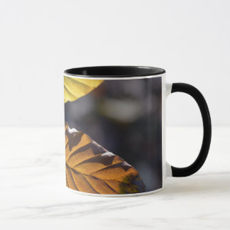 Herbst verlässt Tasse
