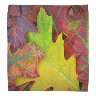 Herbstlaub in Gelbem, in Rotem, in Orange und in Halstücher