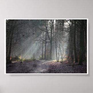 Herbstsonne rays Streifen durch Waldland Poster