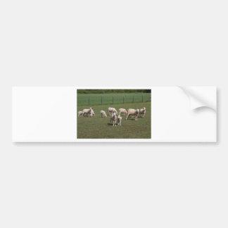 Herde der Schafe Autoaufkleber
