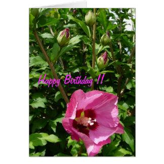 Hibiskus Hibiscus Grußkarte