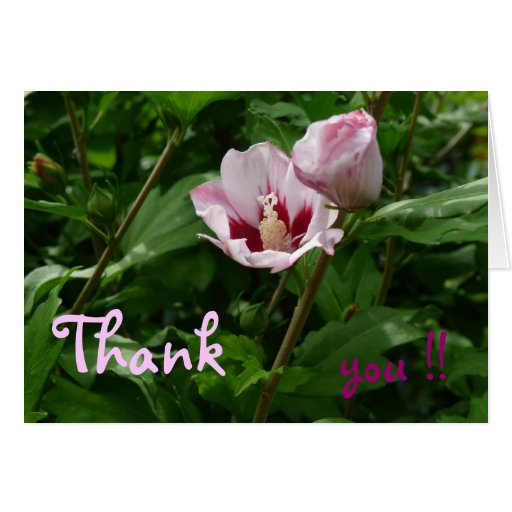 Hibiskus Hibiscus Grußkarte Danke