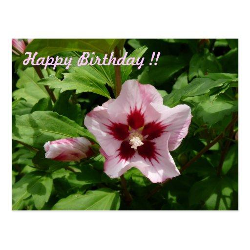 Hibiskus Hibiscus Grußkarte Postkarten