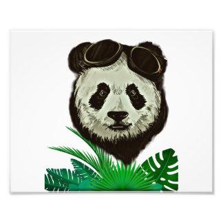 Hipster-Panda-Bärn-Tier Fotodruck