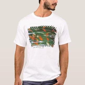 Hohe Winkelsicht der koi Mistfische in einem Teich T-Shirt
