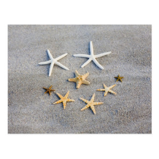 Hohe Winkelsicht eines Starfish auf dem Strand Postkarte